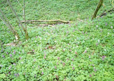 Grüne Pflanzenwelt